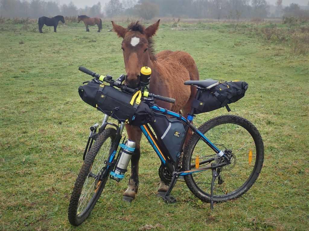Torby do rowerów MTB